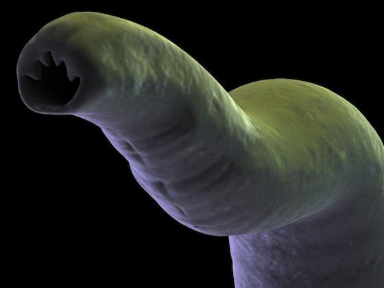 parasyte-pregnant-500x281 A Tentacle-Like Parasite that Leads to Pregnancy?! Otaku Rejoice