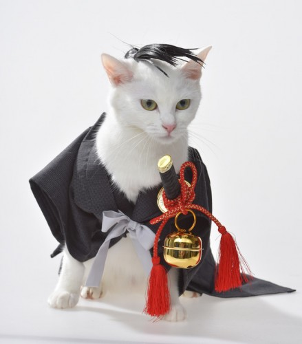 cosplaying-cat-e1460792606623-560x373 The Ultimate Cosplaying... Cat?!