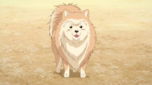 Oda-Cinnamon-Nobunaga-Wallpaper-1 Dogs and Daimyou: How Breeds in Oda Cinnamon Nobunaga Represent the Warlords