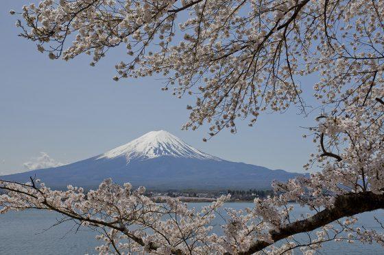 Hanami-Tour-Best-Flower-Viewing-Spots-in-Tokyo-Lesser-Known-Tokyo-Hanami-Recommendations-700x369 Hanami Tour: Best Flower-Viewing Spots in Tokyo - Lesser-Known Tokyo Hanami Recommendations